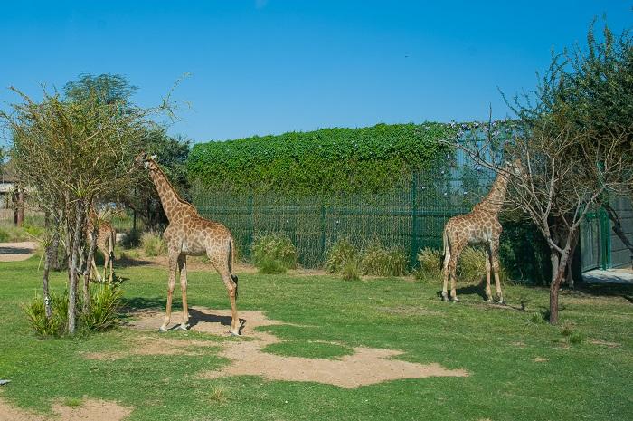 Зоопарк в дубай отзывы недвижимость за рубежом tranio