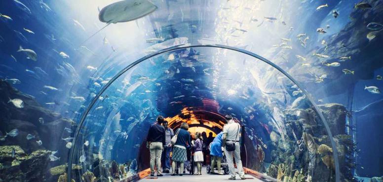 океанариум дубай молл официальный сайт на русском
